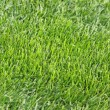 Green grass field — Stock Photo