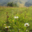 Green meadow in Carpathians, Ukraine — Stock Photo