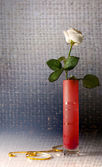 Still life with one white rose — Stock Photo