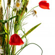 Wild flowers poppy bouquet — Stock Photo