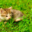 Royalty-Free Stock Photo: Kitten on green grass