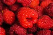 Rasberry background — Stock Photo
