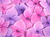 Pink flower background — Стоковое фото