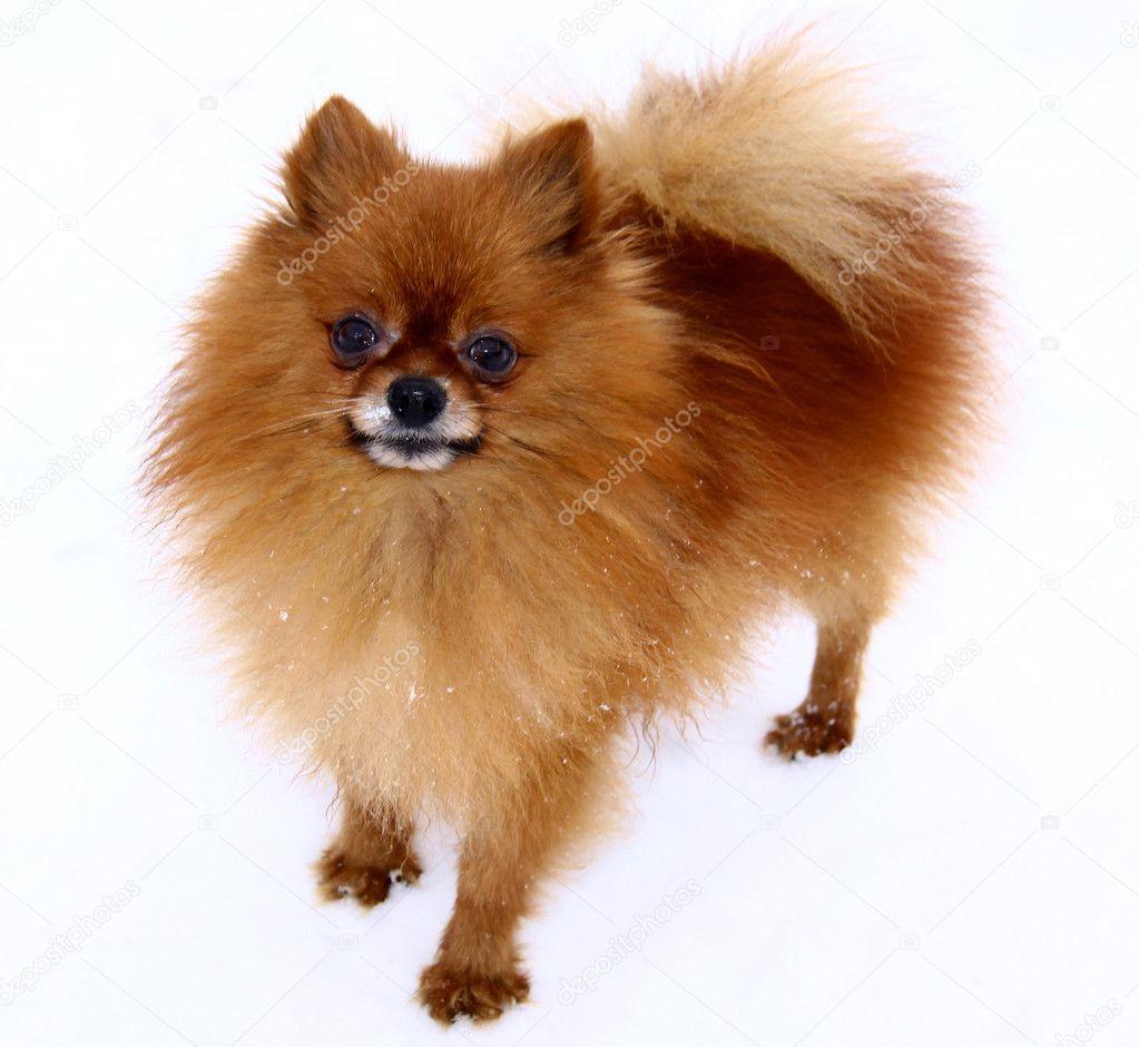Фото собак и щенков на белом фоне
