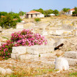 Archaeological Dig Site at Apollo Temple, Corinth, Greece. — Stock Photo #3403618
