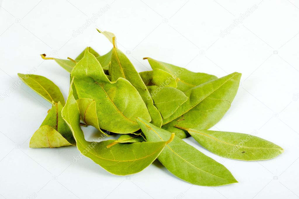 Laurel leaves isolated on white background — Stock Photo #3429636