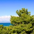 Beautiful sea coast in Greece — Stock Photo #3558902