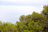 Pine on the mountain in Greece — Стоковое фото