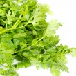 Fresh coriander (cilantro) herb isolated on a white background — Stock Photo