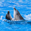 Couple of dolphins dancing — Stock Photo