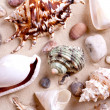 Seashells in sand — Stock Photo #3736033
