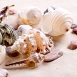 Seashells in sand — Stock Photo