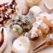 Seashells in sand — Stock Photo #3736061