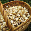 Eatable mushrooms in the big basket — Stock Photo