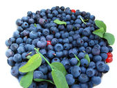 Fresh blueberries — Stock Photo