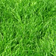 Fresh green grass — 图库照片