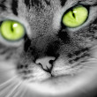 Green-eyed cat — Stock Photo #3875667