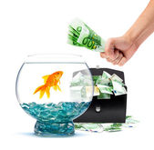 Goldfish with money — Stock Photo