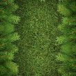 Christmas spruce  texture — Stock Photo