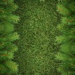 Christmas spruce  texture - Stock Photo