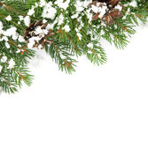 Christmas framework with snow and cones — Stock Photo