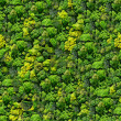 Forest seamless pattern view from above. — Stockfoto