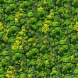 Forest seamless pattern view from above. - Stock Photo