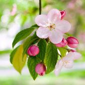 Springtime. — Stock Photo