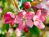 Primavera. — Foto de Stock