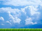 Grass. — Stockfoto