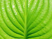 Leaf. — Stock Photo