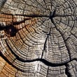Stock Photo: Old wood.