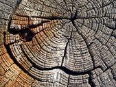 Old wood. — Stock Photo