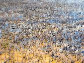 Swamp. — Stock Photo