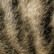 Stock Photo: Fur.