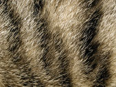 Fur closeup background. — Stock Photo