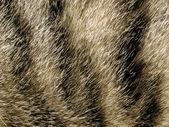 Fur. — Stock Photo
