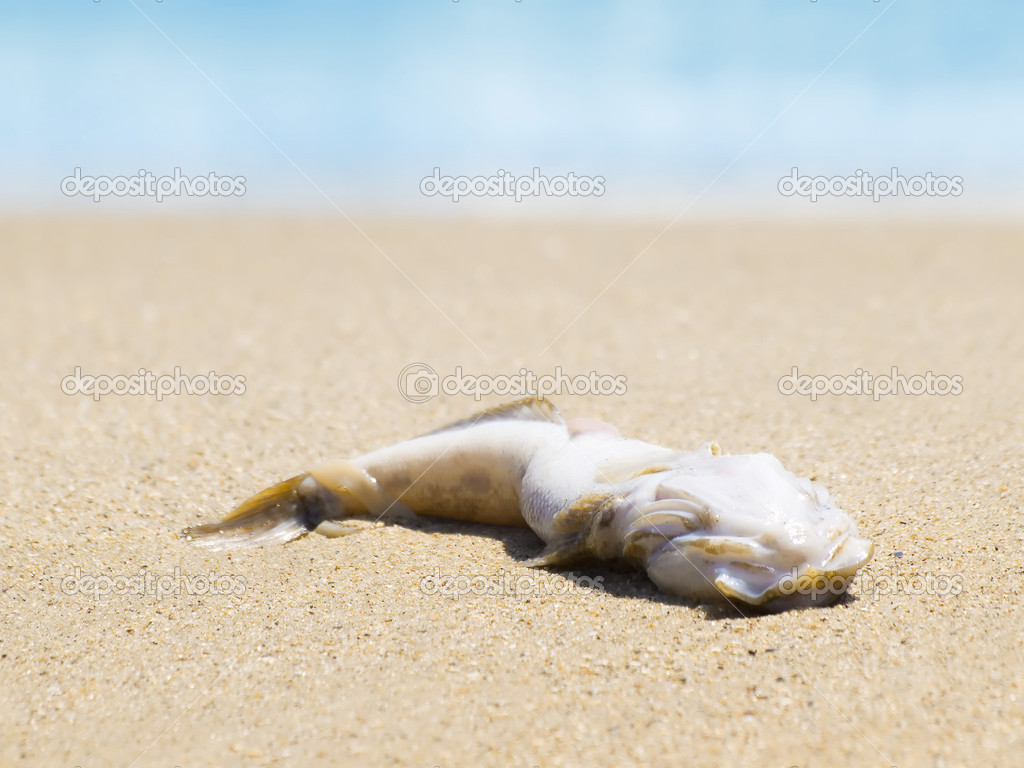Dead fish on seashore.  — Stock Photo #3716744