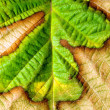 Stock Photo: Leaf closeup background.