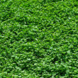 Green grass background. — Foto de Stock