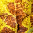 Leaf closeup background. — Stock Photo