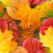 Fall leafs seamless background. - 图库照片