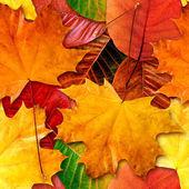 Fall leafs seamless background. — Stock Photo