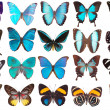 Collection of butterflies isolated on white — Stock Photo #3346274