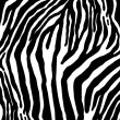 Zebra as  texture — Stock Photo