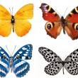 Stock Photo: Some various butterflies isolated on white