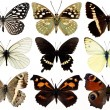 Collection of butterflies isolated on white — Stock Photo #3348911
