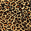 Leopard skin as background - Stock Photo