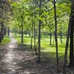 Landscape park in spring — Stock Photo #3349654