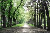 Landscape park in spring — Stock Photo